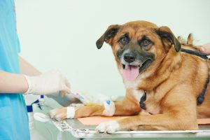 what-happens-when-your-pet-gets-injured