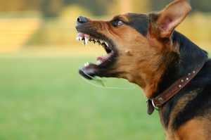what-you-should-know-about-dog-bites