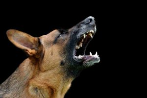 Dog Bites Occur Hundreds Of Times Per Year In Florida