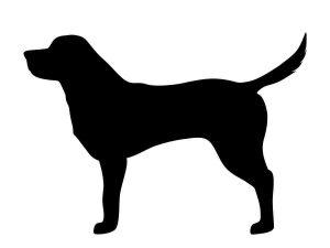 florida-legislature-passes-new-dog-bite-law