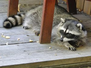 are-you-liable-when-someone-is-injured-by-a-wild-animal-on-your-property