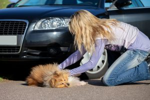 what-to-do-when-pets-get-involved-in-a-road-accident