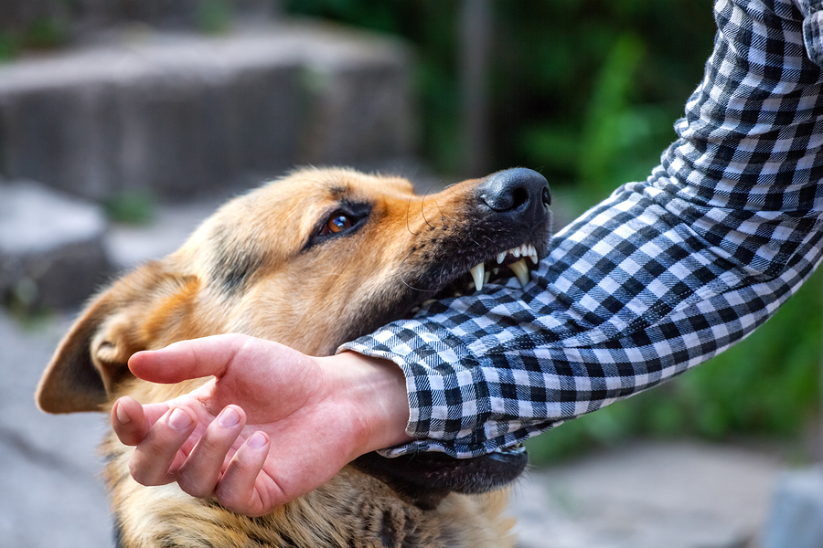 failing-to-vaccinate-dog-bite-injuries-and-lawsuits